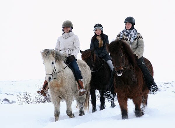 horse riding reykjavik3