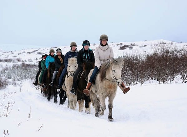 horse riding reykjavik4