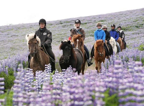 horse riding reykjavik8