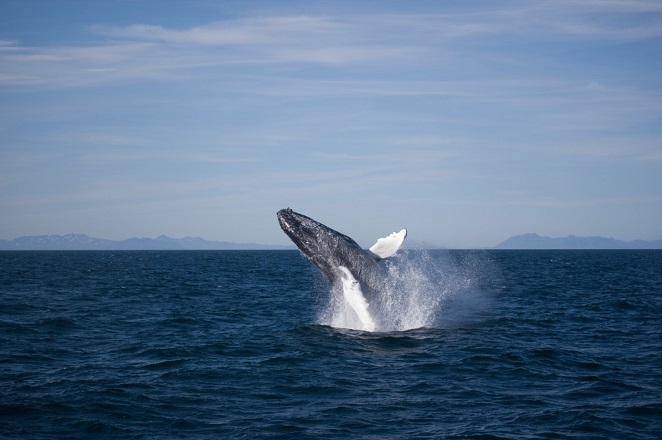whale-watching-1024x682